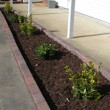 what a little mulch can do